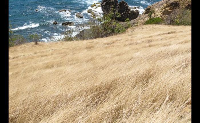 Le chemin entouré d'herbe