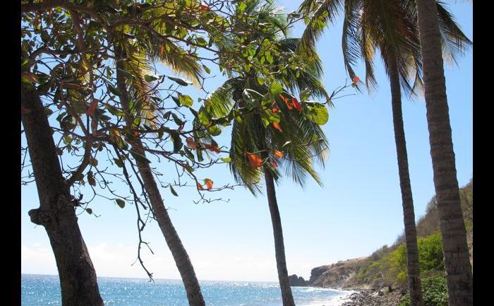 Au travers des cocotiers...