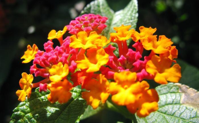 Floraison tropicale