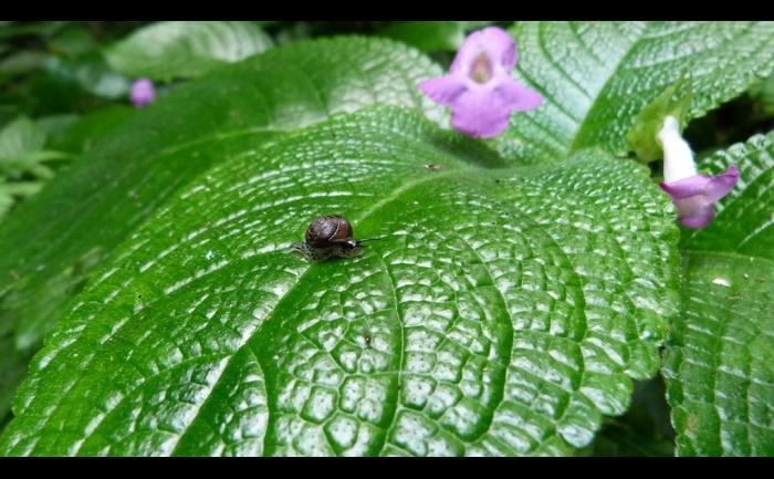 La nature à son rythme - Photo par Pomliane
